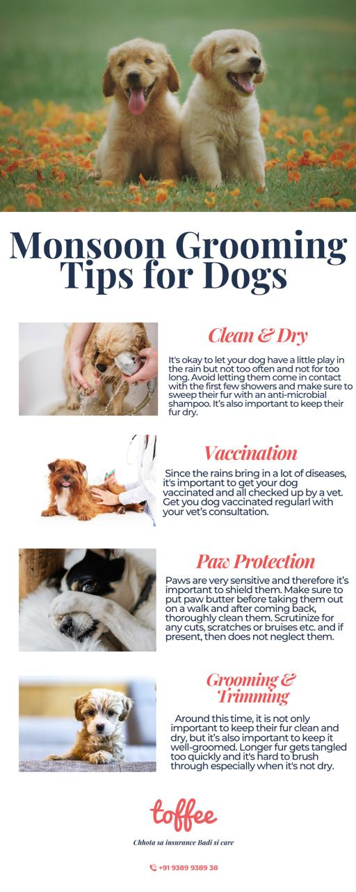 Monsoon Grooming Tips for Dogs